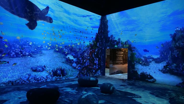 Barco G60 offers immersive aquatic experience