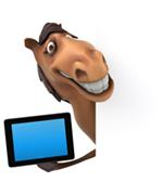 Video walls and horses funny image