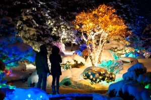 Colorado gardens come alive at night